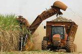 la fabricación de biocombustibles hace peligrar el derecho a la alimentación