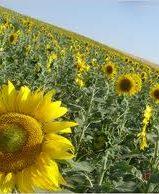APPA critica la propuesta de la UE de limitar el biocarburante convencional