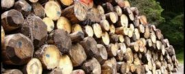 Avebiom exige al futuro Gobierno la constitución del Consejo Forestal Nacional
