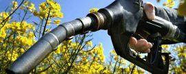 Andalucía se convierte en la región europea con mayor cuota asignada para la producción de biodiésel