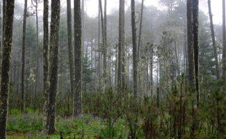 Bosques y energía: Un 40% del suministro actual de energía renovable en el mundo procede de la madera