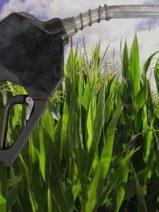 No hay acuerdo entre los países de la UE en el uso de los biocombustibles provenientes de los cultivos