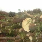El 46% del consumo de energía en Paraguay procede de biomasa producida con leña y carbón vegetal