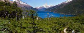 Diez millones de hectáreas de la Patagonia se evaluarán para el desarrollo de la biomasa en Chile