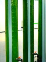 El proyecto de microalgas CO2Algaefix, primera instalación mundial con esta tecnología para captura de CO2