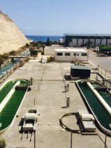 Superalimentos a partir de microalgas cultivadas gracias a una central eléctrica