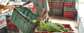 El desperdicio de alimentos es responsable del 8 por ciento de las emisiones globales de gases de efecto invernadero