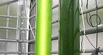 El proyecto Energreen: Microalgas que eliminan CO2 y que producen biodiesel y biogás.