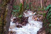 Industria autoriza a Biorenova la construcción una planta de biomasa en el municipio asturiano de Nonaya (Salas).