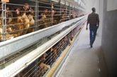El precio estable de la biomasa permite la competitividad de las industrias agroalimentarias