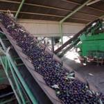 2M€ para impulsar el uso energético de los residuos leñosos agrícolas