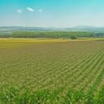 APPA denuncia que el Parlamento Europeo discrimina a los biocarburantes respecto a la industria petrolífera