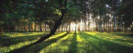 Ence consigue la certificación forestal sostenible, FSC, en el 32% de su patrimonio, más 25.000 hectáreas