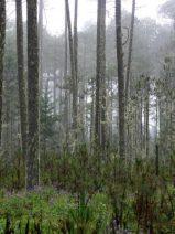 Galicia deroga el decreto que impedía la instalación de plantas de biomasa de más de 10 MW