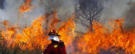 Los incendios forestales perjudican al sector de la biomasa, quien además podría ayudar a controlarlos