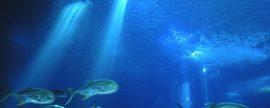 La UE presenta el Plan de acción Crecimiento Azul que tiene el mar como fuente de crecimiento sostenible