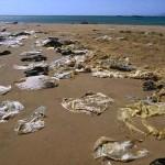 ¿Qué pasaría si las bolsas y otros plásticos pudieran ayudar a salvar el medio ambiente en vez de destruirlo?