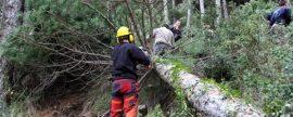 La acumulación de ramas y matorrales por la falta de cuidados en los bosques, causa de los incendios