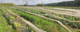 1.241.770 euros de ayudas para cooperación en biomasa agroalimentaria