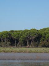 Doñana se juega seguir siendo Patrimonio de la Humanidad por el proyecto de Gas Natural