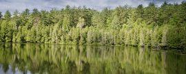Un Passivhaus de 1.500 m2 puede conseguir la misma reducción de CO2 que 1.000 árboles