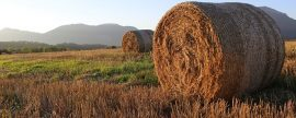 Contencioso entre Acciona y Ence y ganaderos por el uso de paja para biomasa en Extremadura