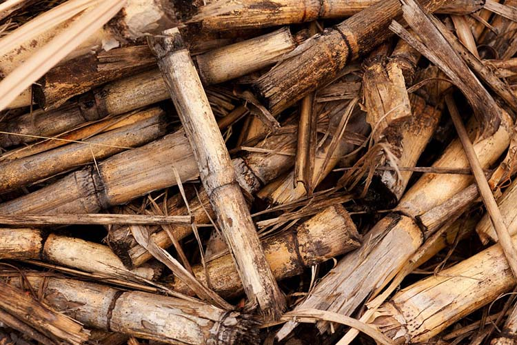 biomass for heating