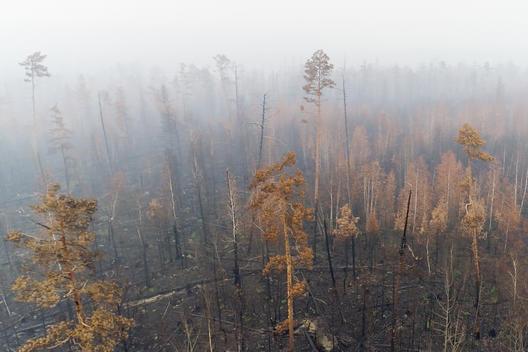 incendios en los bosques siberianos