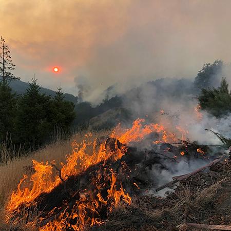 La pérdida de bosques supone un grave problema y también va en aumento.