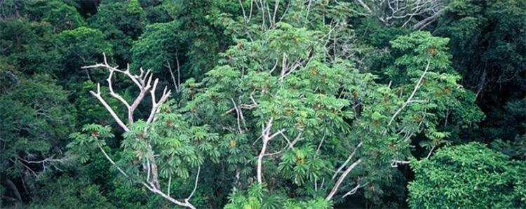 Los bosques primarios proporcionan más almacenamiento de CO2 y hábitats más esenciales que los bosques jóvenes. De ahí la importancia de su protección.
